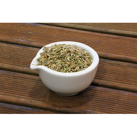 Fenouil doux (foeniculum vulgare)