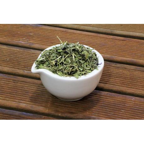 Mauve (malva sylvestris) - feuilles
