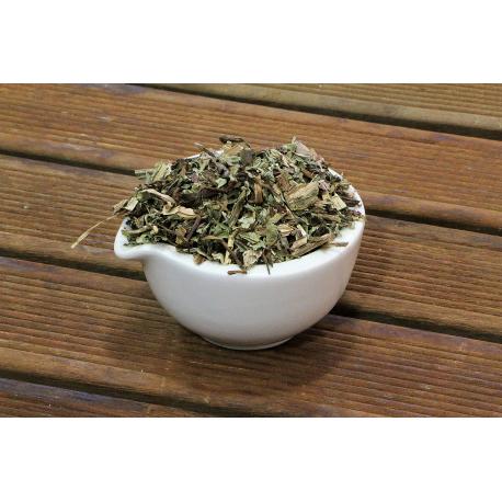 Pissenlit (taraxacum dens leonis)