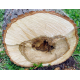 Tilleul (tilia platyphyllos) - aubier rouge