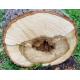 Tilleul (tilia platyphyllos) - aubier baguettes
