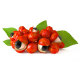 Guarana graines1